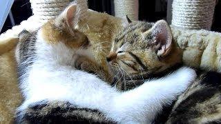 A Cute Kitten Has Advice on How to Be a Better Boyfriend
