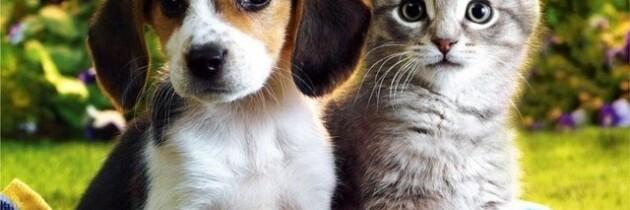 Cat-Friend VS Dog-Friend 2